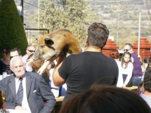 Ημιαγριος χοίρος προσφερεται σε δημοπρασία από τον Νίκο Γκουζιούρη