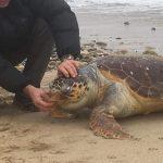 Νεκρή θαλάσσια χελώνα στα Βρασνά. Τι πρέπει να κάνεις